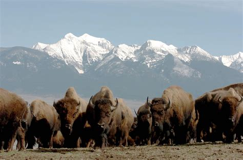 peer sues to prevent transfer of bison range management to cskt mtpr