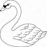 Swan Coloring Illustration Vector Depositphotos sketch template