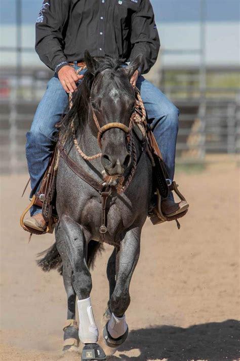 hackamore riding training horse horses bosal horsemanship amazinganimals xyz cow western horseandrider reined reining