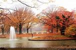 代代木公園~東京都心的肺 @ 日本。私旅行 :: 痞客邦