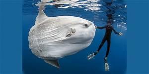 Most Rare Sea Animals