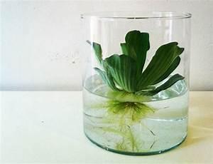 Plante Aquatique Ikea JV64 Jornalagora