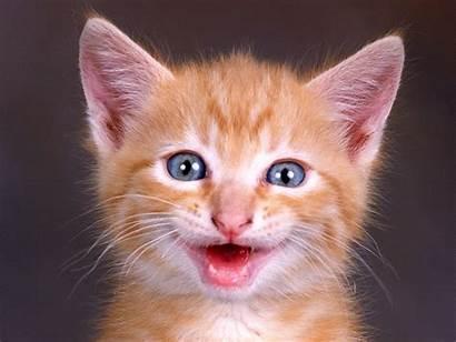 Funny Cats Fanpop Cat Kitten Happy Kitty