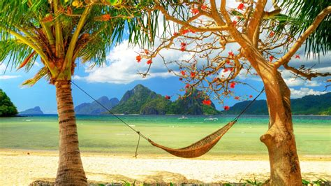 hd hintergrundbilder sommerurlaub palmen haengematte meer