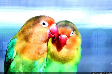 fond d ecran qui bouge gratuit pour ordinateur fonds d 233 cran gratuits oiseaux exotiques