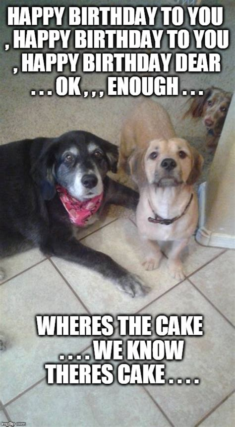Dog Birthday Memes - birthday cake dog meme acot message board u2022 view topic happy birthday susan aww cute