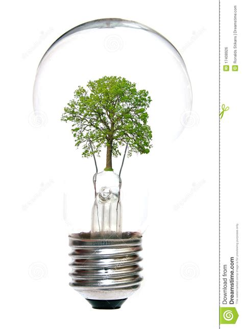 light bulb with tree inside royalty free stock image