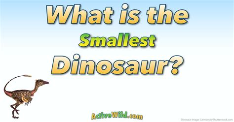 What Is The Smallest Dinosaur List Of Small Species With Pictures & Info