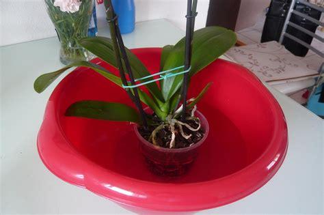 un potager pour votre balcon entretenir une orchid 233 e d appartement