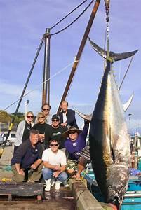 world record giant bluefin tuna