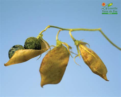 cuisiner com fonds d 39 écran site officiel de la lentille verte du puy