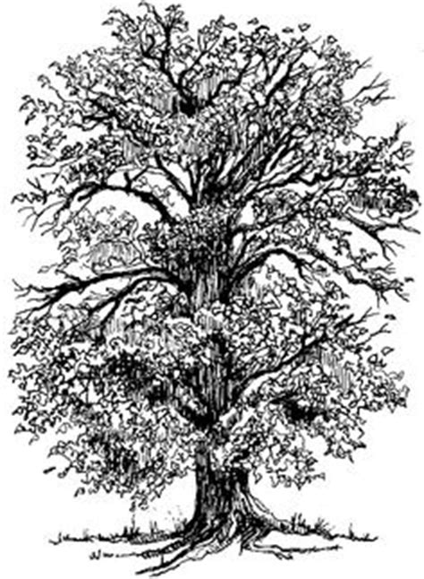 50 Clipart trees ideas   coloring pages, tree drawing
