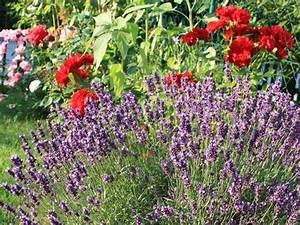 Pflanzen Für Trockene Schattige Standorte : pflanzen f r sonnige halbschattige und schattige ~ Michelbontemps.com Haus und Dekorationen