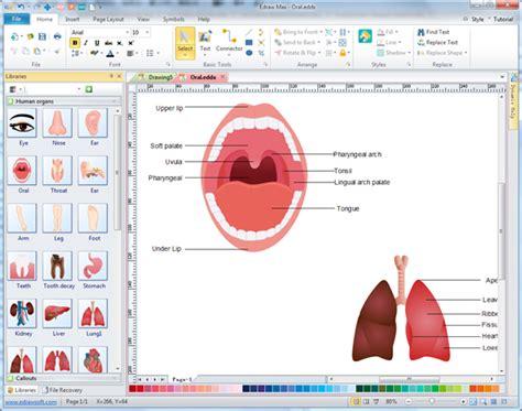 Human Organs Diagrams Free Download Diagram