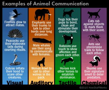 animals communicate howstuffworks