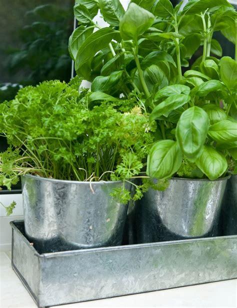 coltivare in casa coltivare le piante aromatiche in casa anche in inverno