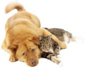 pictures of cats and dogs eco dogs and cats vegan eco friendly products cats dogs