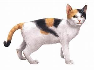 動物 猫 イラストのイラスト Pictures to pin on Pinterest