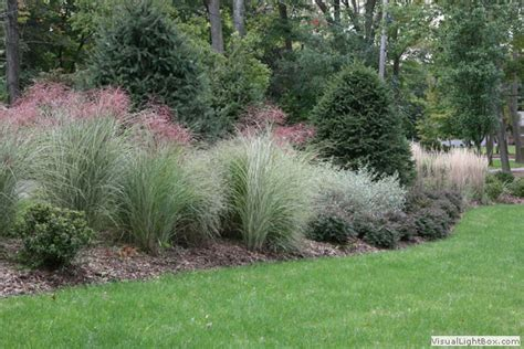 border grasses for landscaping nanciworld may 2011
