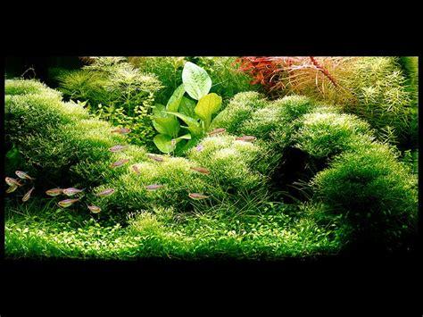 tanaman hias air tawar mata air ibu