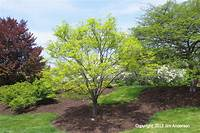 small trees for landscaping Smaller Shade Trees to Consider for Your Garden