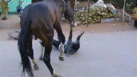 horse human attacks dangerous