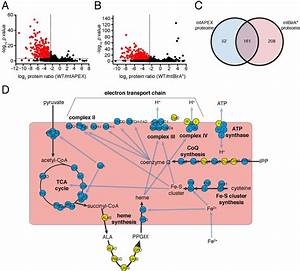 Figures And Data In Elucidating The Mitochondrial Proteome