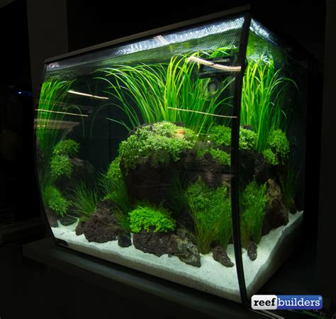 fluval tanks rss fluval flex tanks brings a perspective to small