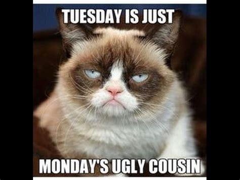 epic grumpy cat memes  kidsmpeg youtube
