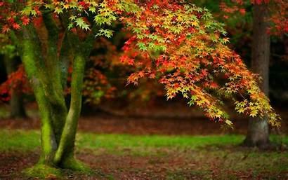 Trees Tree Background Wallpapers Autumn Desktop Wallpapersafari