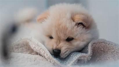Puppy Dog Fluffy 4k Pet Background Uhd