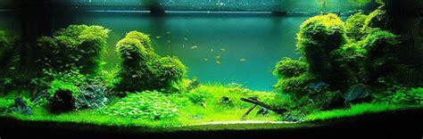 Aquascape Zu Viel Licht