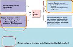 physiology block    hormones fuel metabolism