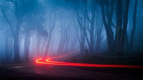 Foggy Forest Road Lights Desktop Wallpaper