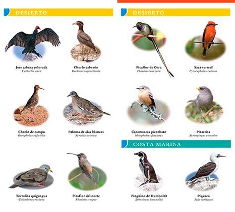 planeta sostenible guía desplegable de aves de chile