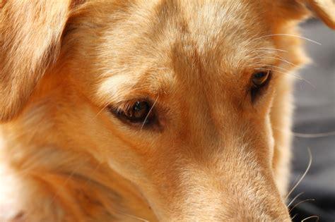 dog comfort  crying stranger