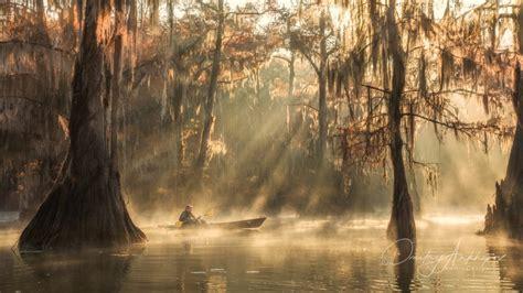 cypress swamps  texas  louisiana daniel kordan