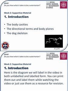 Anatomia Vertebra Musculoskeletal System
