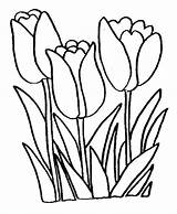 Coloring Flower Tulip Flowers Pages sketch template