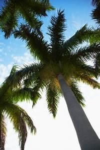 Welche Erde Für Palmen : welche frucht w chst auf palmen ~ Watch28wear.com Haus und Dekorationen