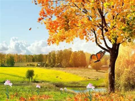 Animated Beautiful Nature Wallpaper - beautiful nature animated wallpaper http www