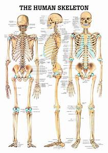 Labeled Skeletal Diagram