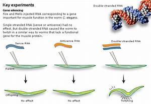 Developmental Biology 3230