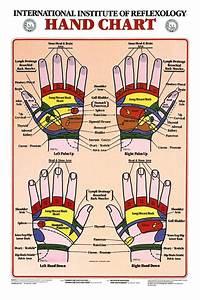 Hand Reflexology Anatomical Chart