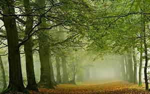 Wallpaper, Sunlight, Trees, Landscape, Leaves, Nature, Branch, Green, Morning, Mist, Path, Tree