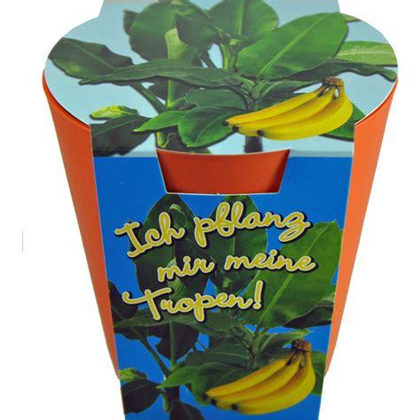 mini bananen pflanze bananen pflanze herziges geschenkli geschenkidee ch