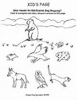 Coloring Animals Prairie Pages Dog Sheets Underground Grasslands Habitat Nice Template Popular Drawings sketch template