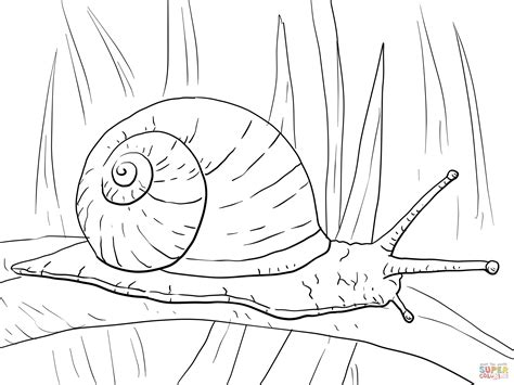 Kleurplaat Turbo Slak by Free Coloring Pages Free Clip Free