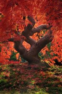 beautiful tree pictures great inspire