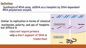 Trna Encodes The Instructions For Synthesis Of Proteins